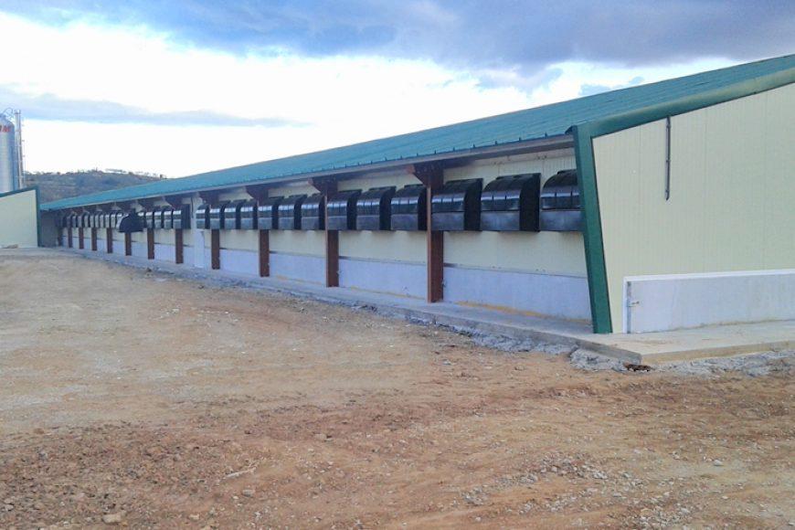 New quail farm in Spain